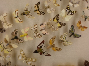 Moth display